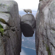 Sheep On Boulder